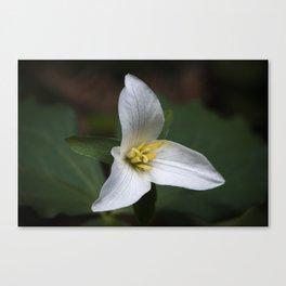Trillium flower. Canvas Print
