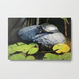 Tara the Turtle Metal Print