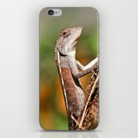 lizard iPhone & iPod Skins featuring lizard by Anja Ergler