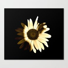 Out of Darkness Comes Light Canvas Print