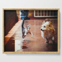 Kitten And Dog Running And Playing Together Serving Tray
