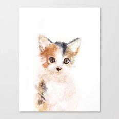 Baby Cat, Mio Canvas Print