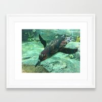 platypus Framed Art Prints featuring Platypus by Pippa Selby