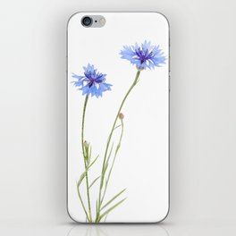 Two blue cornflower flowers isolated on white iPhone Skin