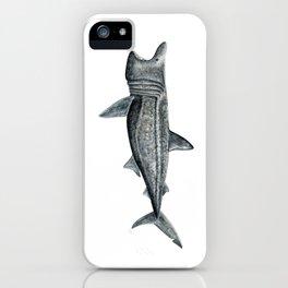 Basking shark (Cetorhinus maximus) iPhone Case