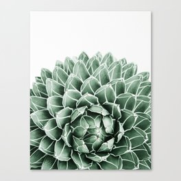 Succulent splendour Canvas Print