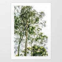 Trees Up High Art Print