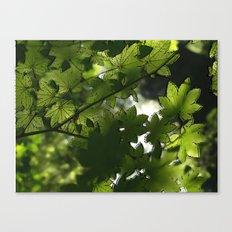 Leaf It To Me.  Canvas Print