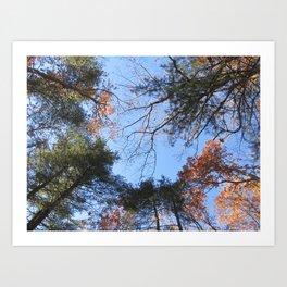 Half Fall Art Print
