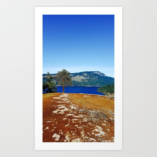 Lone Arbutus, Mid Afternoon Stoney Hill Art Print