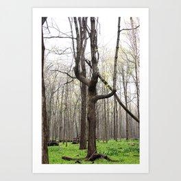 W tree Art Print