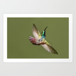 humming bird freeze frame Art Print