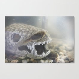 Tad and his Skull House Canvas Print