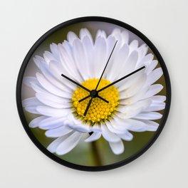 Colourful daisy flower Wall Clock
