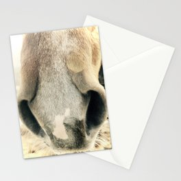 Curious Nose Stationery Cards