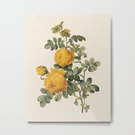Vintage Yellow Rose Botanical Illustration Metal Print
