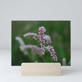 Seedhead of Persicaria maculosa Mini Art Print