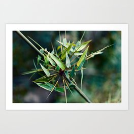 JUICY BAMBOO Art Print