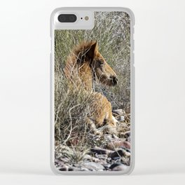 Salt River Foal Finding A Spot to Rest Clear iPhone Case
