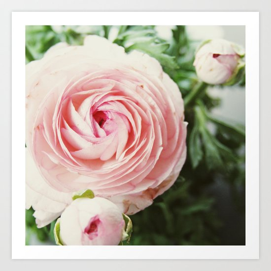 Pink Ruffles Art Print