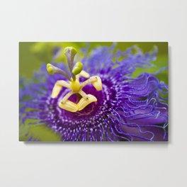 Macro Photo : Purple Passiflora Royale Flower Metal Print