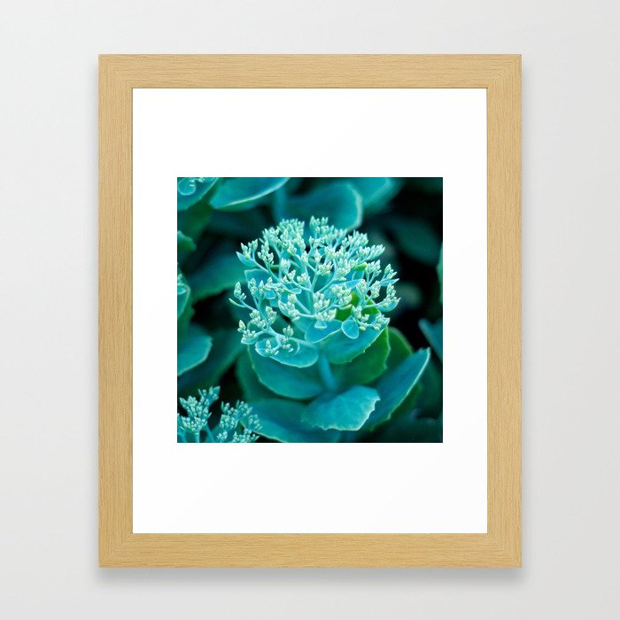 Flower Buds - I Framed Art Print
