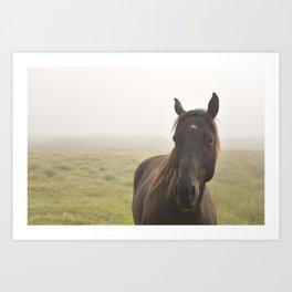 Wild Horse in Newfoundland Art Print