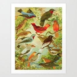Amazonian Birds by Göldi & Emil August Belem Brazil Colorful Tropical Birds Scientific Illustration Art Print