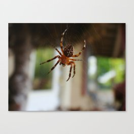 Charlies Web Canvas Print