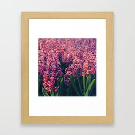 Hyacinth field #2 Framed Art Print