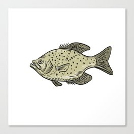 Crappie Fish Side Drawing Canvas Print