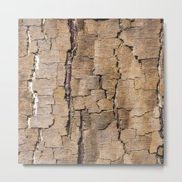 Brown tree trunk with abstract patterns and textures Metal Print