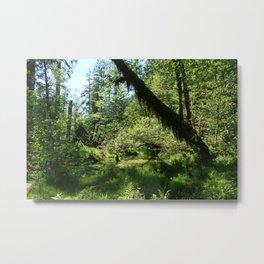 Hoh Rainforest Tones Metal Print