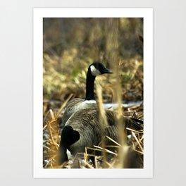 Goose Gathering Art Print