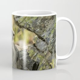 Marmot on Naches Peak Coffee Mug