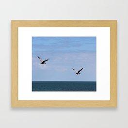 Pair of Pelicans Framed Art Print