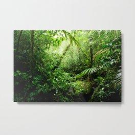 Warm Glow Rainforest Creek Metal Print
