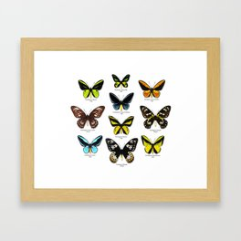 Butterfly012_Ornithoptera Set1 on White Background Framed Art Print