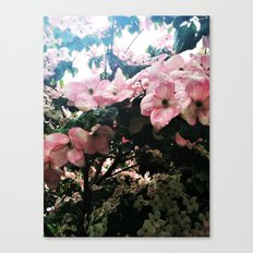 Dogwood Rainful Canvas Print