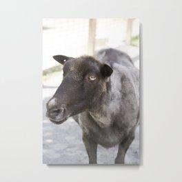 Amber Eyed Goat Metal Print