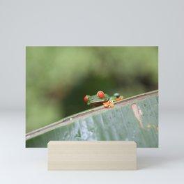 Red eye Frog on leaf Costa Rica Photography Mini Art Print