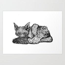Black-backed jackal - Canis mesomelas Art Print