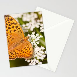 Argynnis paphia butterfly beauty Stationery Cards