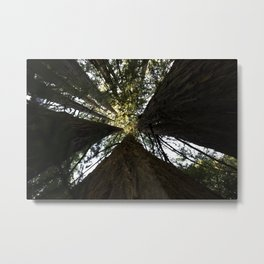 Redwood Forest Metal Print