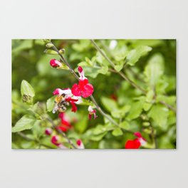 Busy bee in the flowers Canvas Print