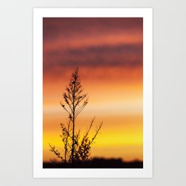 Simple Plant in Camargue Sunrise Art Print