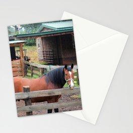 Bay Paso Fino Stationery Cards