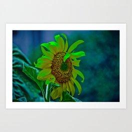 The Moody Flower Art Print