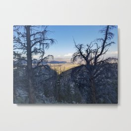 Ancient Bristlecone Pine Forest #1 Metal Print