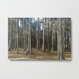 Old Souls Rooted In Beauty Metal Print